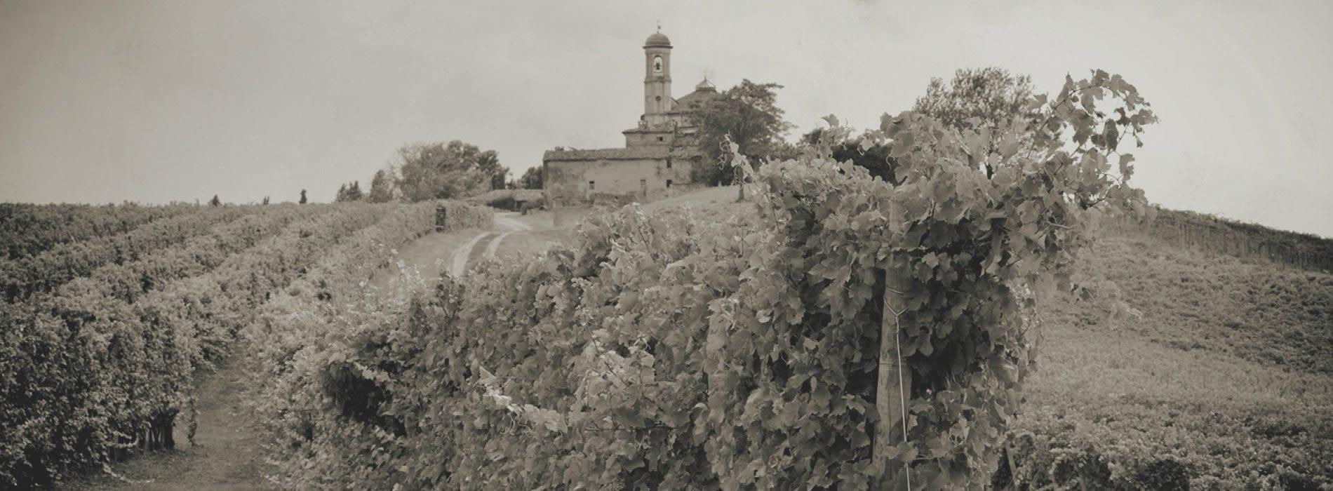 foto storica vitigni nelle slide