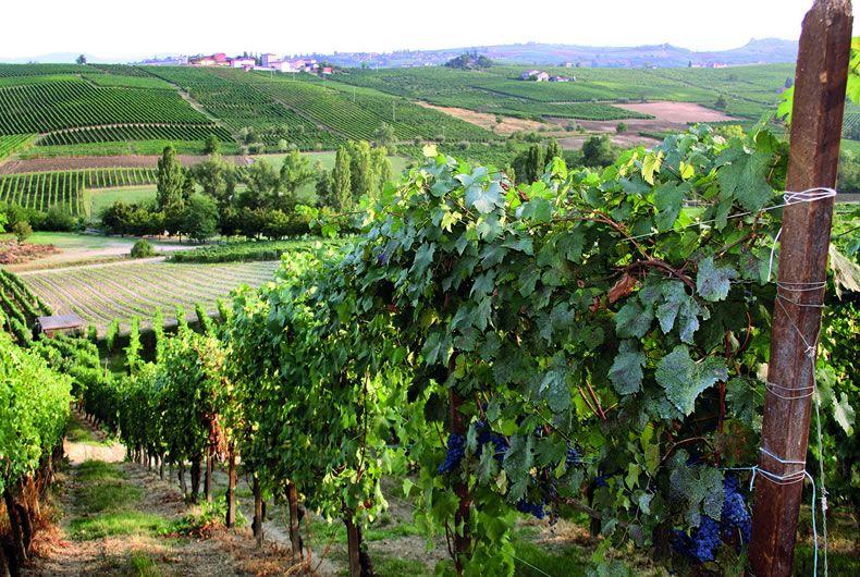 Piacenza, terra di eccellenze enogastronomiche